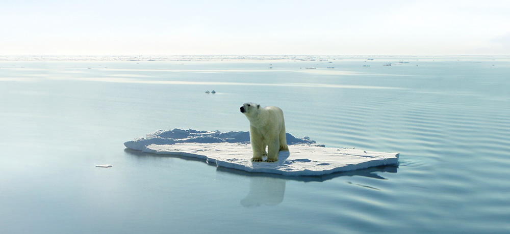 Polar bear floating on ice sheet
