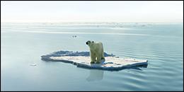 Polar bear on floating ice