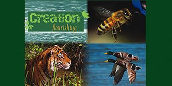 Creation flourishing